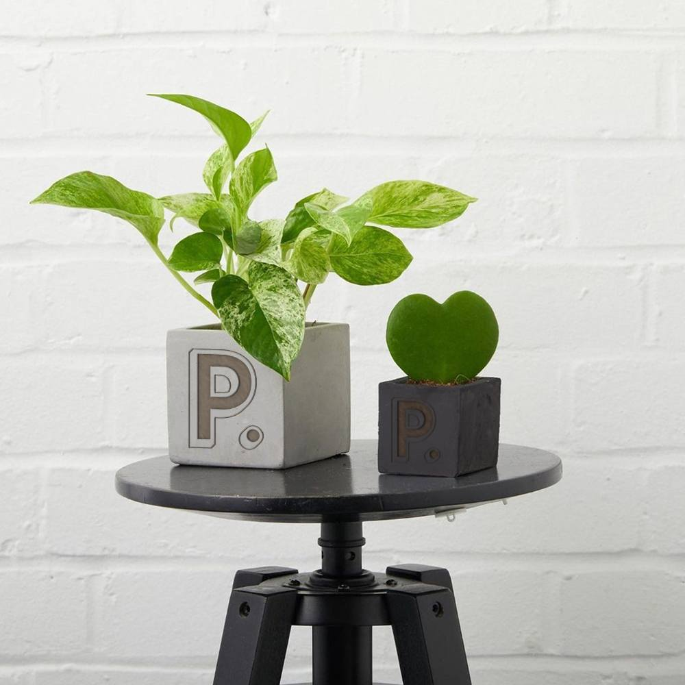 hey-pot-desktop-plants-branded-with-logo-for-employee-gifting